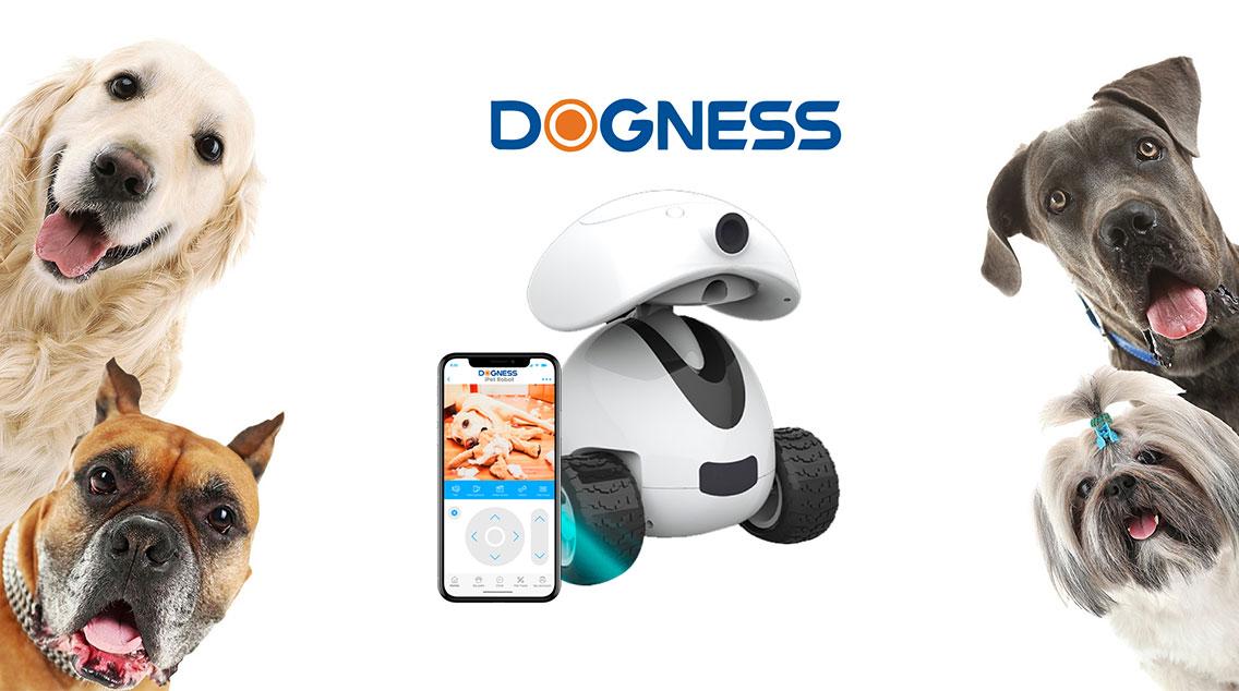 dogness2